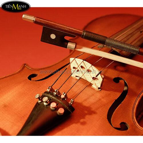 Ngựa Đàn Violin Thường